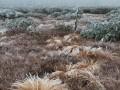trsy zmrzlé trávy na Vánoční louce
