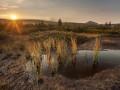 Mokřady Jizerky