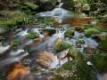 Potok Jedlová