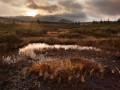 Mokřady na Jizerce