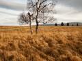 často focený strom na Jizerské louce