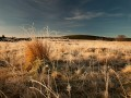 Trsovitá trava