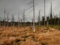 Uschlé stromy na Černých jezírkách